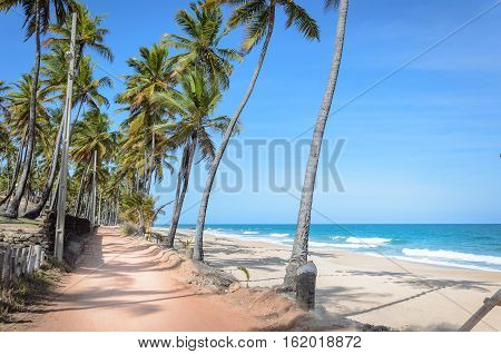 Sandy Road Surrounded By Coconut Trees Next To A Beautiful Beach With The Waves On A Beautiful Sunny