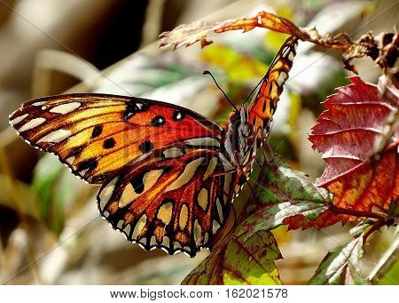 Beautiful butterfly soaking up the sun and displaying it's beautiful colors