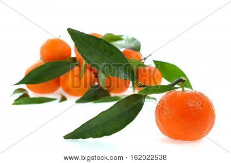 Fresh Clementines Organic Farming, On A White Background