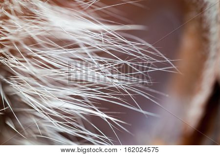 Animal fur, whiskers, hair, bristles in closeup view. Shallow depth-of-field.