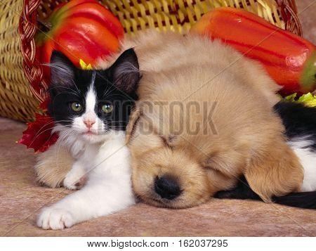 lovely cat and puppy sleeping over cat