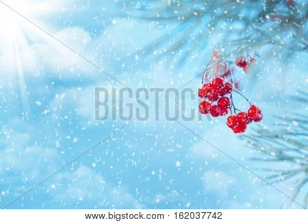 Winter nature background with frozen berries of mountain ash against the sky