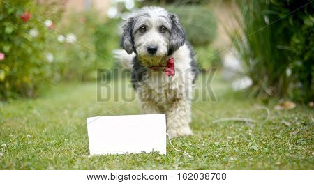 picture of a The cute black and white adopted stray dog on a green grass. blank invitation for text. focus on a head of dog