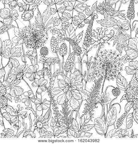 Hand drawn seamless pattern with wildflowers. Black and white doodle wild flowers and grass. Monochrome floral elements. Vector sketch.