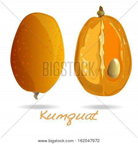 ripe kumquat fruits image isolated on white background .