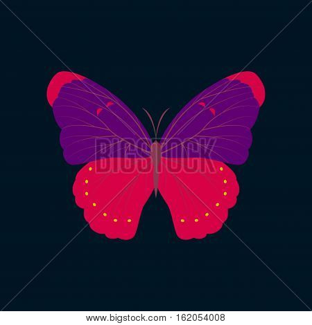 Colorful flat icon of butterfly isolated on dark blue