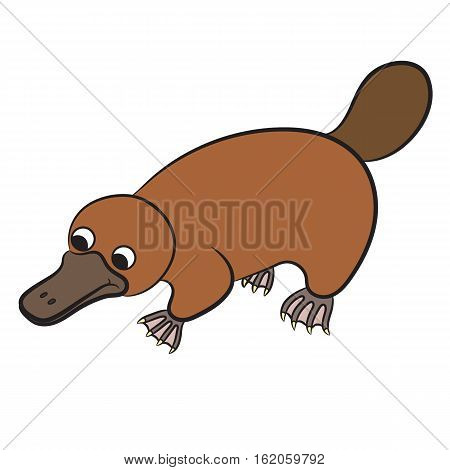 Cartoon illustration of platypus or duckbill animal on a white background. Vector