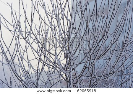 Branches in frost in a cold cold winter day. Feeling cold