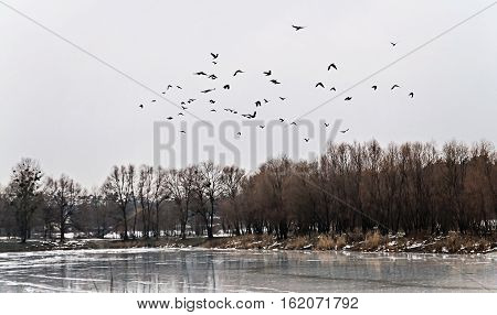 Flock Of Birds Flew Up On The Ice Lake And Snowy Forest Landscape