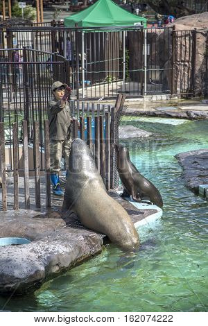 TOKYO, JAPAN - OCTOBER 12, 2016: Unidentified woman feeding sea lions at Ueno zoo in Tokyo Japan. It is Japan oldest zoo opened on March 20 1882