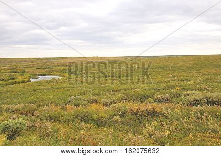 photo of a field of moss under a white sky summer
