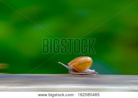 Business competition requires quicktime concept. Snail high speeds