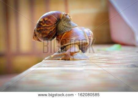 You will never walk alone. Helping each other sharing good relationship brings beauty. Concept Snail snail carrying another walk together.
