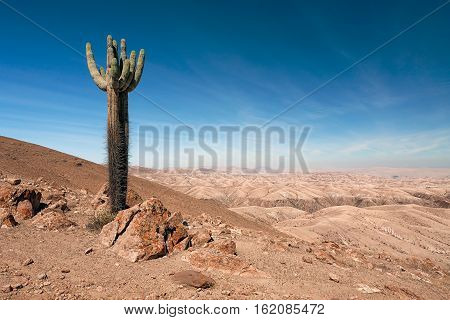 A majestic and proud lone cactus in the endless arid land of Nazca, Peru