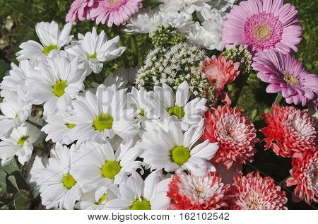 chrysants bouquet of flowers, white pink and cerise