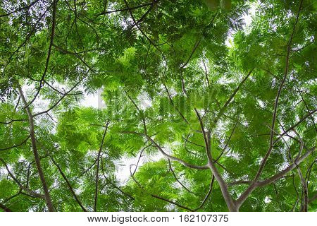 silhouette bottom view group of fresh green leaf and branch in tropical rain forest in Thailand for background and texture