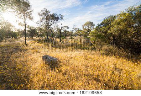 Outback Western Australia sunset scene,a desolated place.