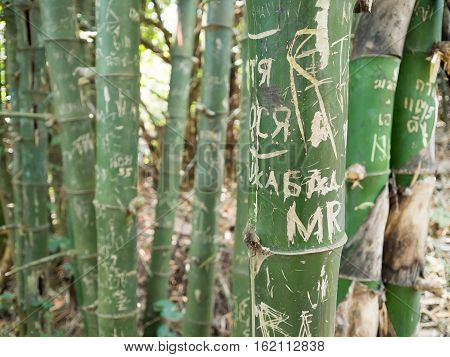 Bamboo Tree With Drawing And Writing.