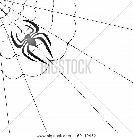 Poisonous Spider and Her Cobweb on White Background