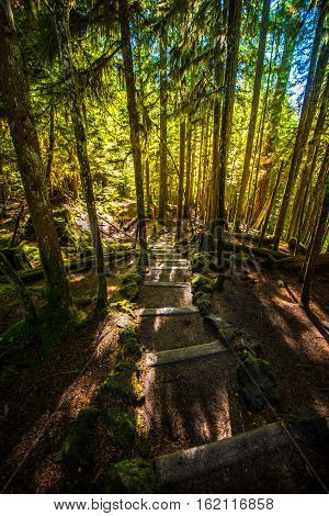 Sahalie Falls Trail Wooden Steps Leading Down To Mckenzie River