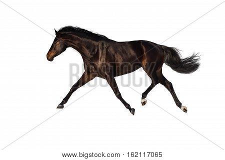 Bay horse trotting isolated on white backround