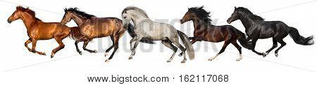 Horse herd run isolated on white background