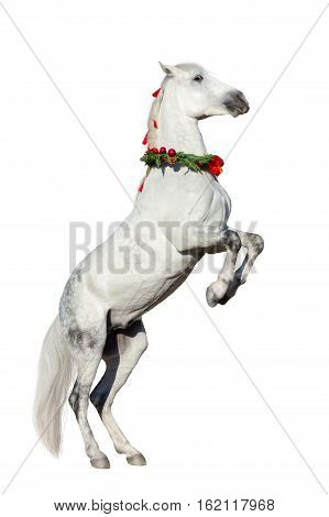 Christmas image of a white horse rearing up wearing a wreath and a bow isolated on white background