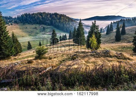 Spruce Forest On A Hillside In Foggy Mountains At Sunrise