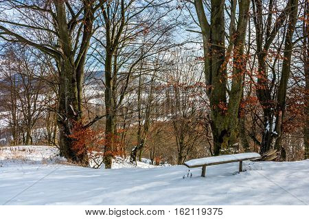 Forest With Red Foliage On Sunny Winter Day