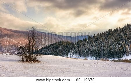 Lonely Tree On Snowy Meadow In Winter Mountains