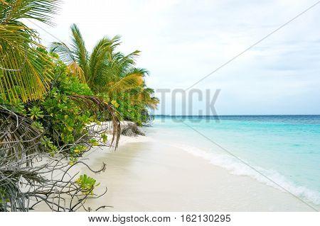 Maldivian island. Paradise in tropics ,beautiful beach