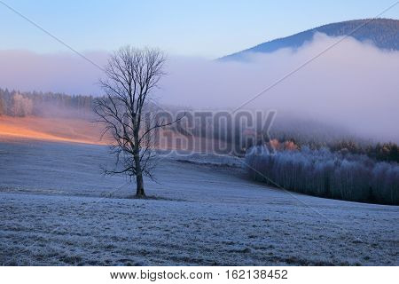 The first rays of the sun on the meadow. Cold morning in Sumava National park hills and trees in the fog and rime misty view on czech landscape blue winter scene.