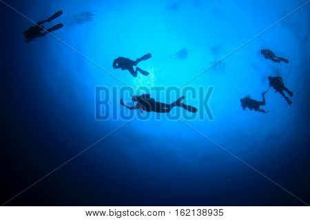 Scuba dive. Group of divers underwater. Scuba diving in the ocean