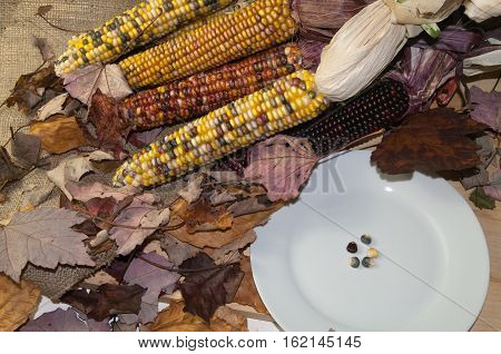 Five grains of pligrim corn that was used to remember the Thanksgiving Day by the Pligrams.