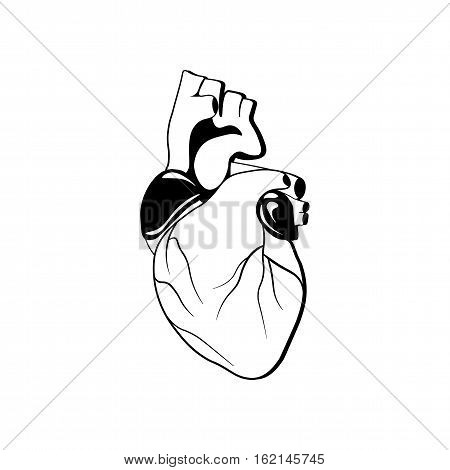 Human heart organ. Vector illustration isolated on white background