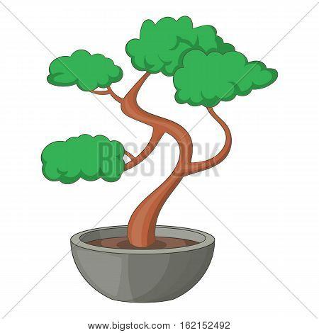 Bonsai tree icon. Cartoon illustration of bonsai tree vector icon for web