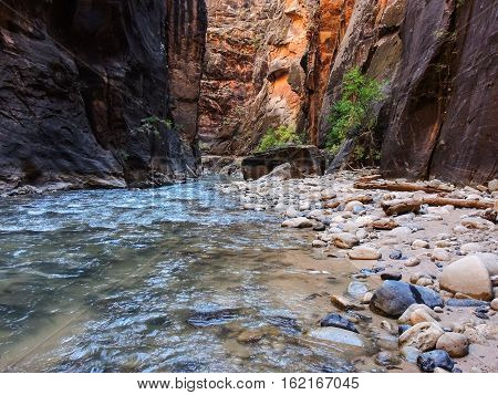 A photo of the Narrows in Zion National Park