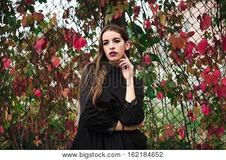 Beautiful model posing in autumn park in front of the fence shrouded in ivy with bright colored leaves feshion