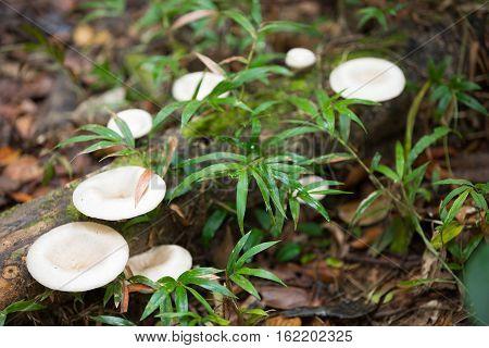 Mushroom On The Trunk In Madagascar Rainforest