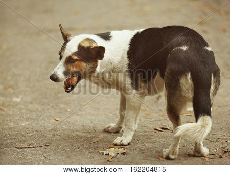 Feeding stray dog outdoors