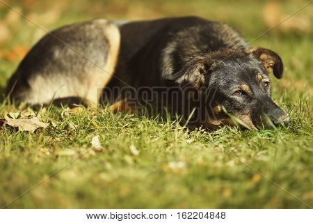Stray dog lying on grass outdoors