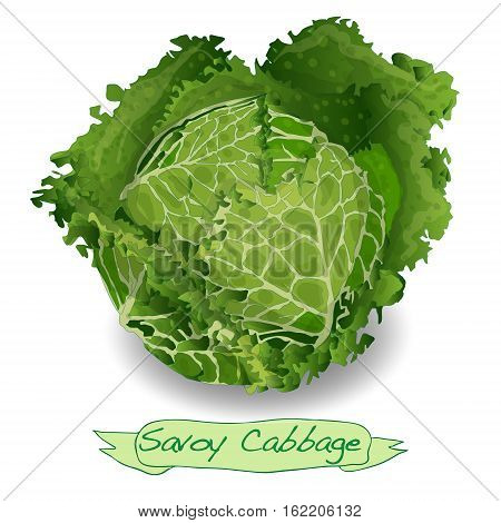 Savoy cabbage image isolated on white background.