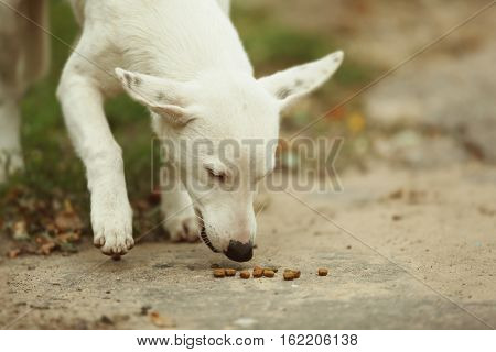 Stray dog eating outdoors