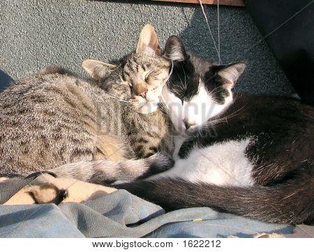 Cute Farm Cats Cuddling While Sleeping