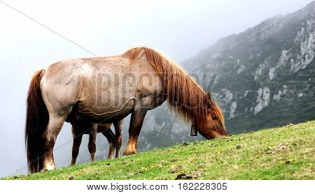 a horse in the mountains of Asturias North of Spain