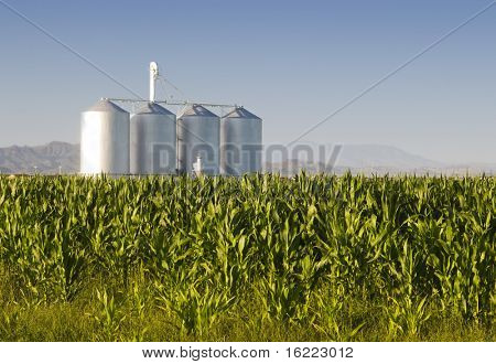 Corn crop with farm silos and mountains in background poster