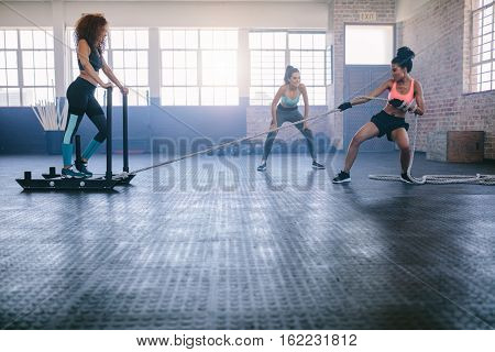 Young Females Working Out At Healthclub