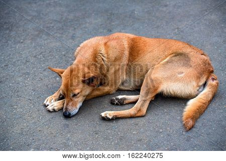 Sad lonesome stray dog sleeps on ground