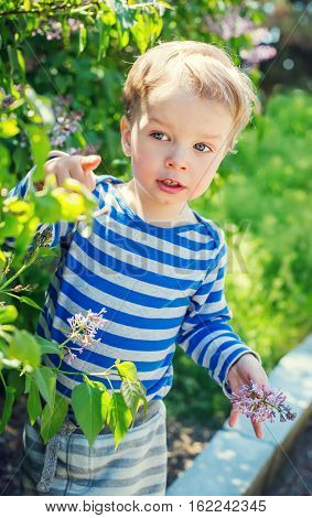 Happy Toddler boy plucks flowers in the spring time