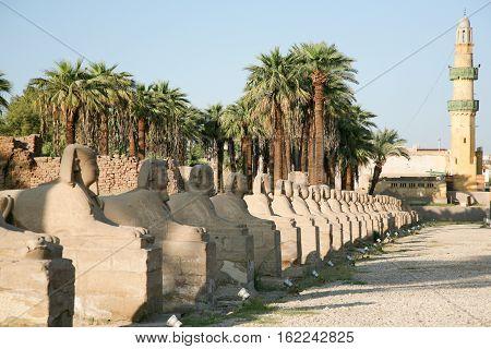 Egyptian Human-headed Sphinx Row